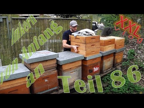 Imkern von Anfang an - Teil 86 - Erster Honigraum 2018 !! XXL Vlog