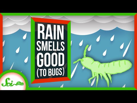 Why Does Rain Smell so Good... to Bugs?