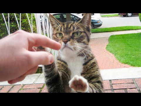 Funniest Dogs 🐶 And Cats 😹 -Try Not To Laugh Challenge 2020