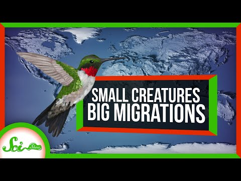5 Tiny Animals With BIG Migrations