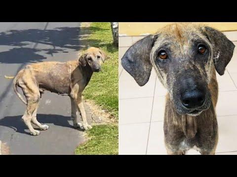 Prova a salvare un cane indifeso dalla strada ogni giorno per un mese: il lieto fine di Doby