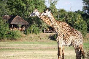 giraffeanna2.125741.jpg