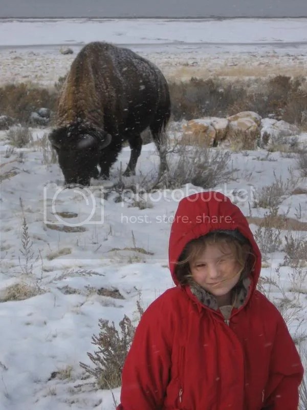 Grace is about 8 feet away from the grazing bison!