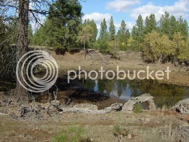 pond farming