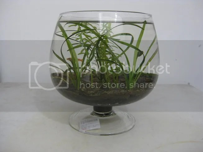 photo plantedbowl2_1_zpsdffa5cb4.jpg