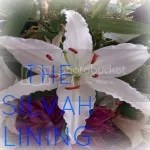 The Silvah Lining