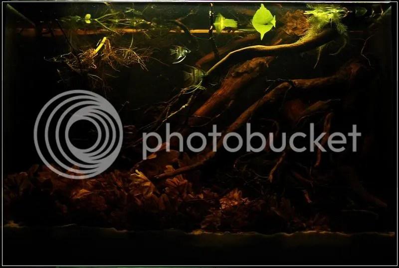 Znalezione obrazy dla zapytania akwarium black water