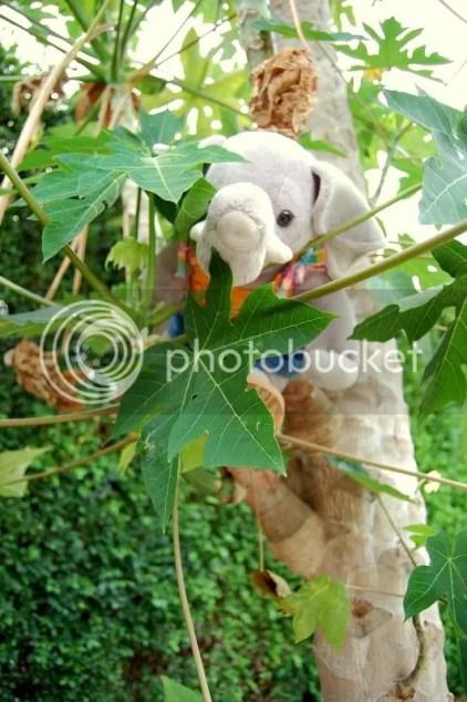 Ella Phlint in a Papaya Tree