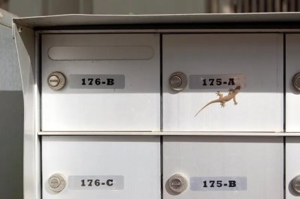 4 Mailboxes, 1 House Gecko