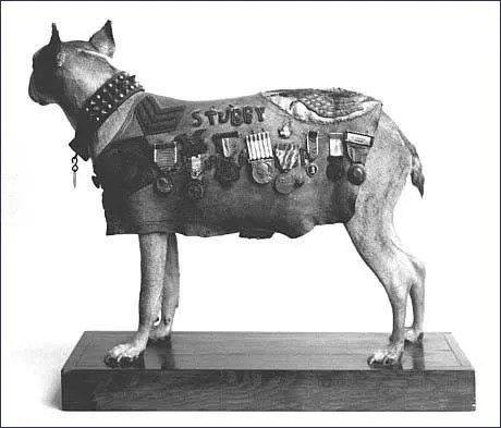 Stubby, 26th Division Mascot (2/6)