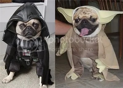 photo star wars dog.jpg