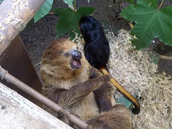 monkey and sloth