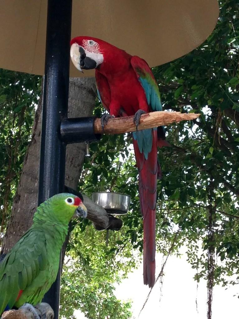 Parrots Miami Seaquarium
