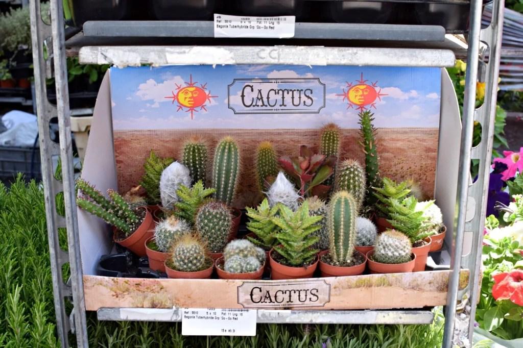 Cactus at columbia road flower market