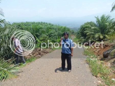 Kebun Kelapa Sawit di Subang
