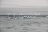 photo 68 iceberg beach 02_zps0ezizq77.jpg
