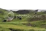 photo icelandic horses 02_zpsffqghivm.jpg