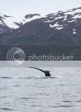 photo whales 03_zpsbdrsxmd5.jpg