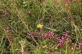 photo connemarairelandwildflowersinthebog_zps0ac65e65.jpg