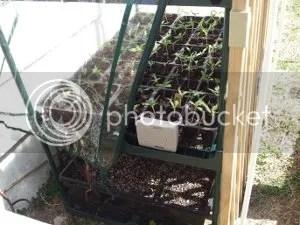 Little Greenhouse, Plastic Raised