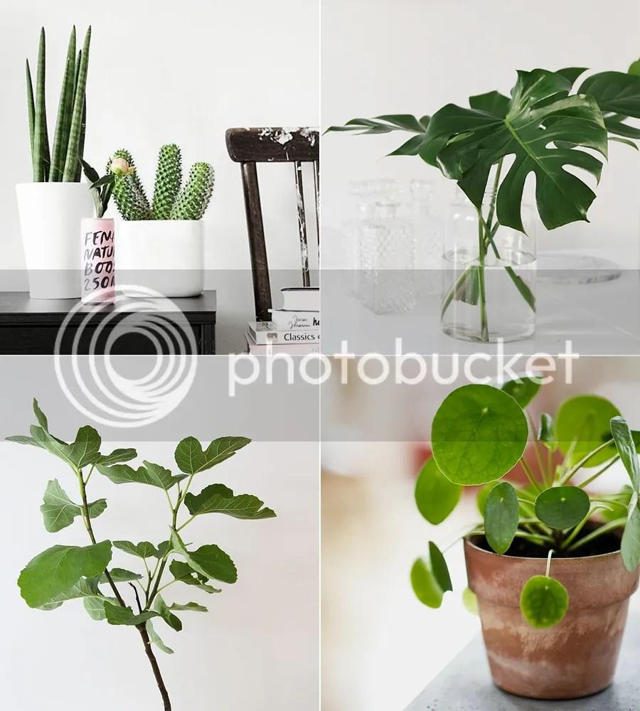 photo plants1_zps78ff7f9d.png