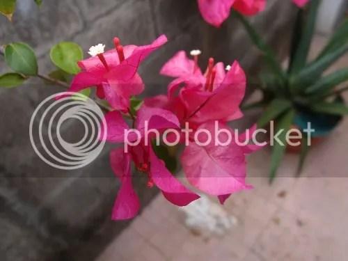 photo 73745526-2022-4699-9942-05760a72a352_zpsba21db76.jpg