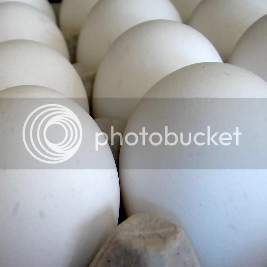 Overmars Eggs
