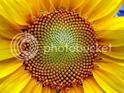 Bí ẩn Tỉ lệ Vàng Ф : Mật mã của vũ trụ - Phần 4 - www.toantrunghoc.com (Ảnh 1)