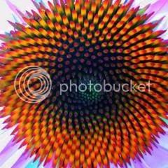 Bí ẩn Tỉ lệ vàng Ф, mật mã tạo thành vũ trụ - www.toantrunghoc.com (Ảnh 6)