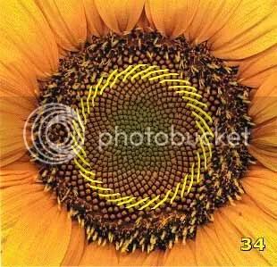 Bí ẩn Tỉ lệ vàng Ф, mật mã tạo thành vũ trụ - www.toantrunghoc.com (Ảnh 7)