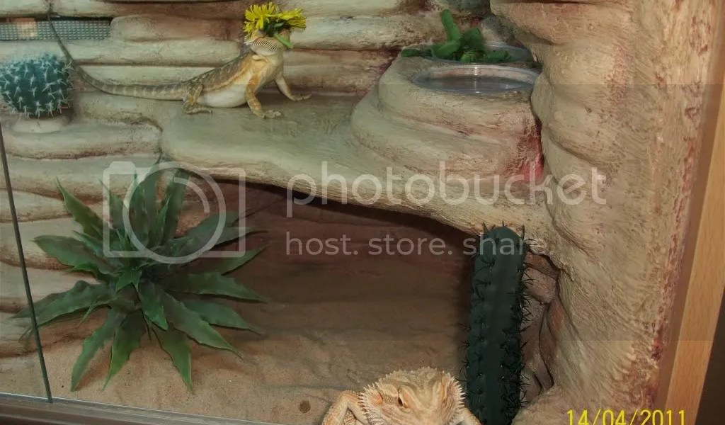 Bearded Dragon Habitat Ideas - Home & Garden Improvement Design