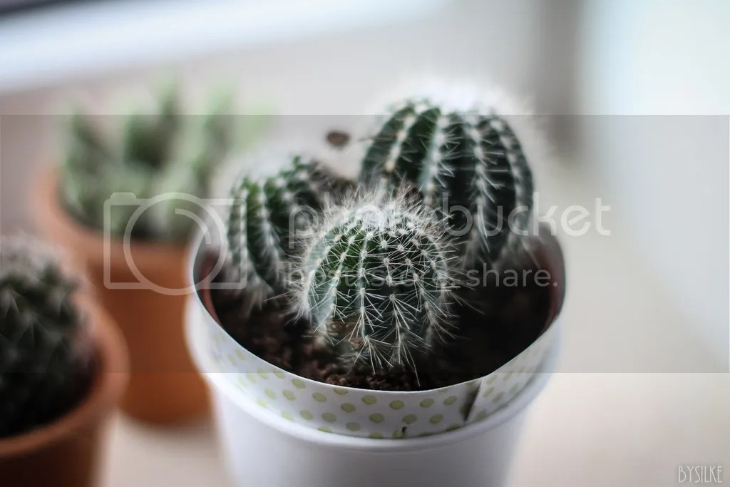 Floor cactus
