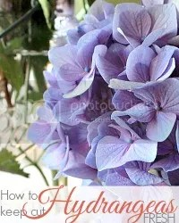 photo keep-Hydrangea-fresh.jpg