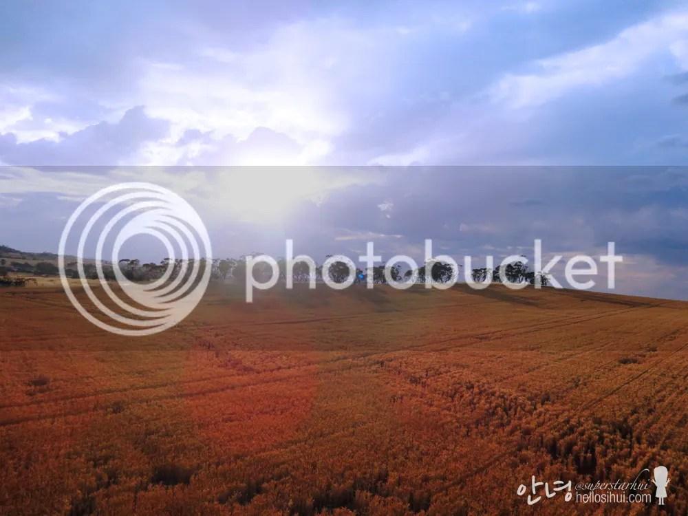 photo IMG_5091 copy_zpshdubzws5.jpg