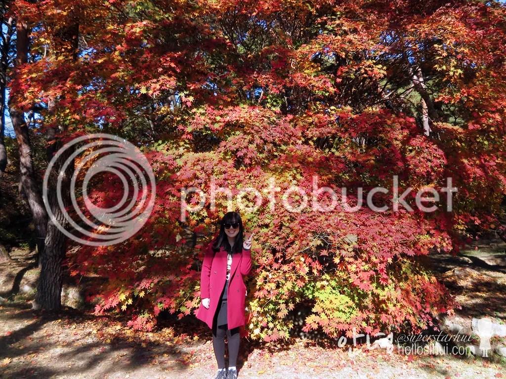 photo IMG_3875 copy_zpsptiuyxhx.jpg