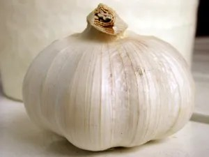 photo garlic8_zpscafebf0f.jpg
