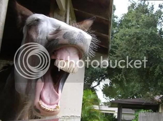 https://i2.wp.com/i110.photobucket.com/albums/n114/corsiphoto/horse1.jpg