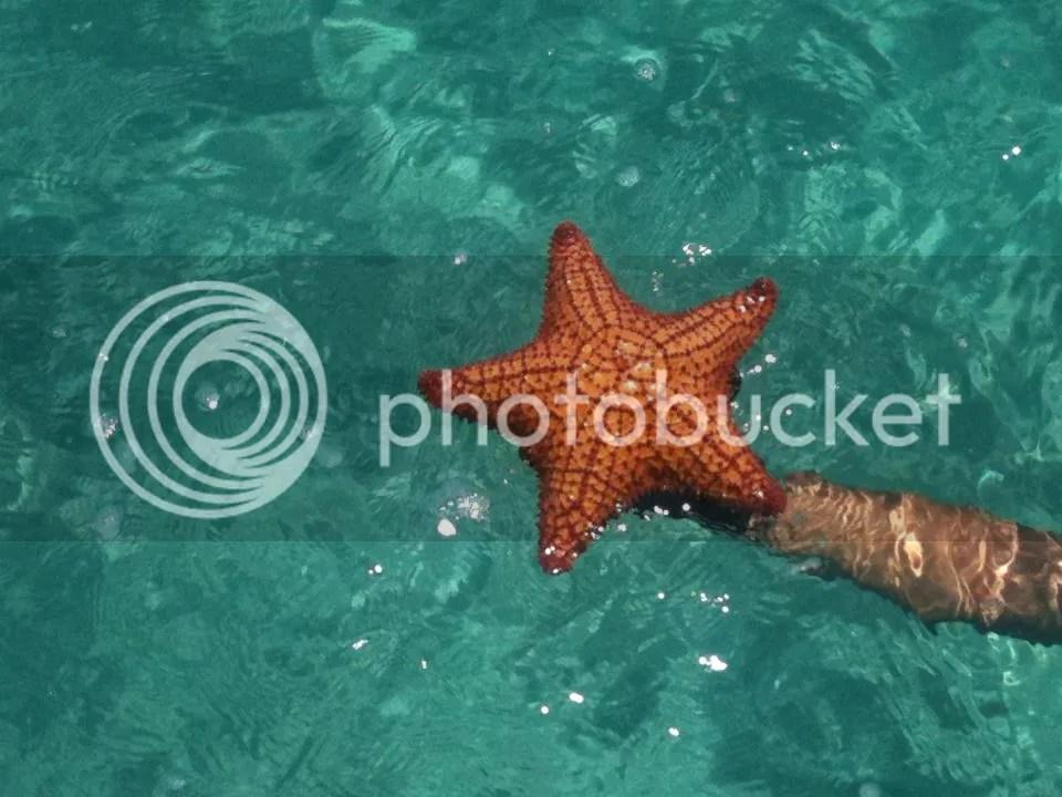 Estrella de Vivir en Miami