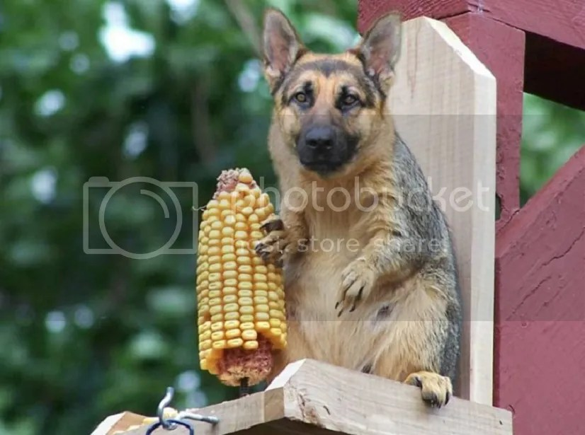 Image result for dog squirrel