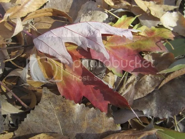 Leaf melange photo Leafmelange_zps85e4bc52.jpg