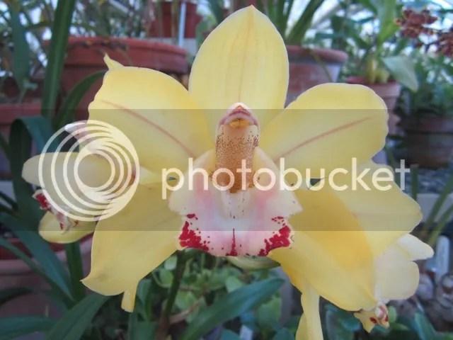 National Botanic Gardens photo Dublin2012-13310a_zps2342eef4.jpg