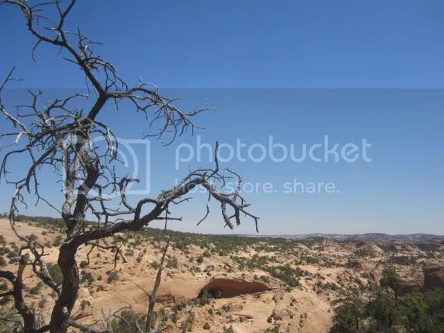 Stripped tree.Navajo National Monument photo Navajostrippedtree_zps45c7e4cd.jpg