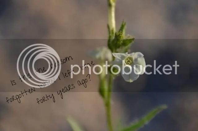 photo 7a0fa932-acb5-4fb1-b579-cc138d5b4afa_zps14asqgcl.jpg