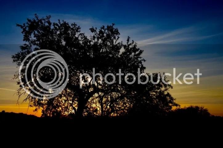 photo DSC_0078201_zpsh1ju2rl1.jpg
