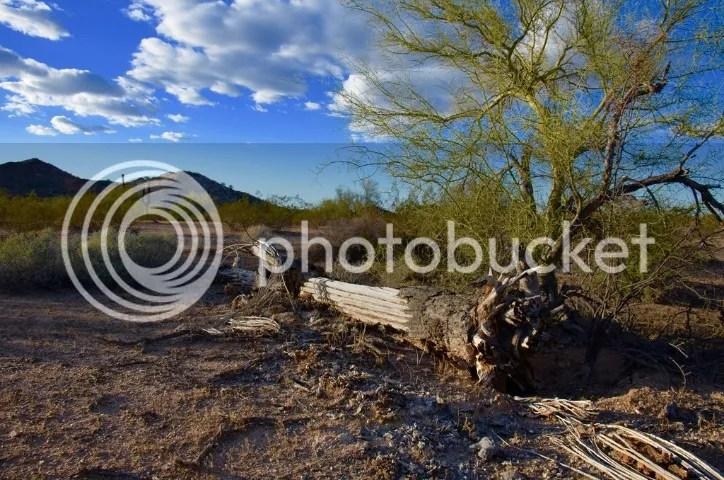 Fallen saguaro, Maricopa County photo DSC_0172_zpsmvv2qqky.jpg