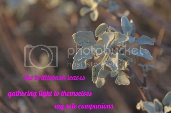 photo Haiga.brittle.leaves_zpsycpwm974.jpg