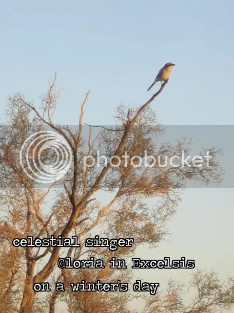 Haiga.bird photo Haigabird_zps1ec7a506.jpg