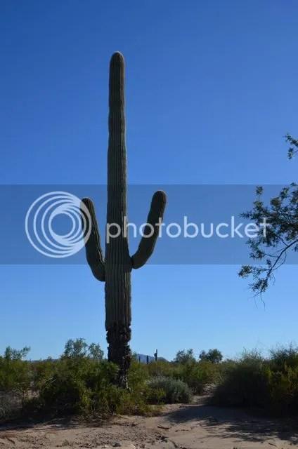 photo Maricopasaguarocactus_zpsf4fb6e8c.jpg