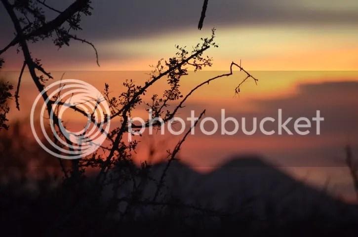 Thorny sunrise photo Sonoran.thorny sunrise_zps5jdlhqib.jpg