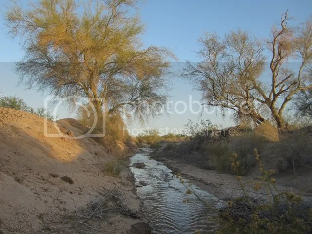 Desert streams photo SonoranApril20131378a_zps84defb6b.jpg